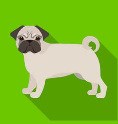 Bulldog single icon in flat stylebulldog vector