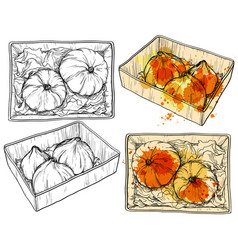 hand drawn pumpkin in paper box watercolor drops vector image vector image