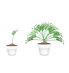 Two philodendron plant in ceramic flower pots vector