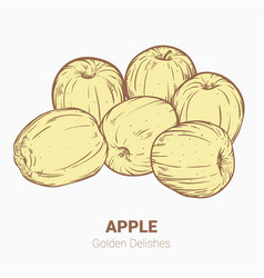 Set of drawing apples golden delicious elements vector
