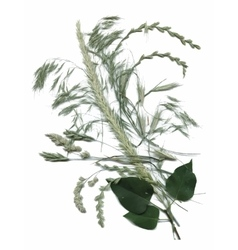 Dry herbarium plants flowers and leaves vector