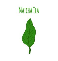 matcha tea leaf - natural organic plantflat style vector image vector image