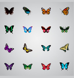 Realistic birdwing tropical moth butterfly and vector