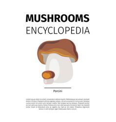porcini mushroom vector image
