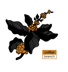 template branch coffee 3color 2 vector image