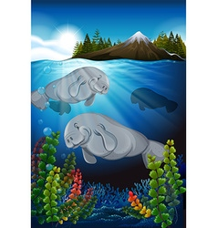Sea cows swimming under the sea vector