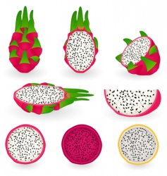Dragon fruit vector