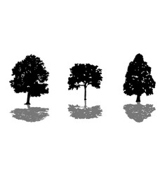 tree set of black silhouettes with shadow vector image