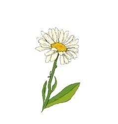 Daisy flower vector image