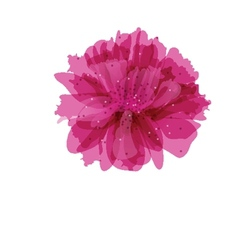 Peony flower vector image vector image