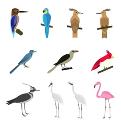 Set of beautiful birds vector