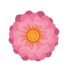 Pink beautiful blossom vector