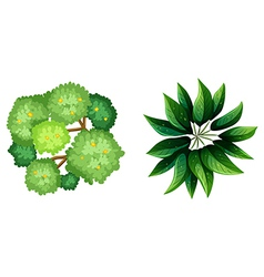 A topview of a plant vector image
