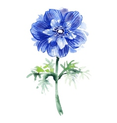 Blue watercolor anemone beautiful flower vector