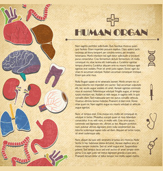 Medical concept with human organs vector
