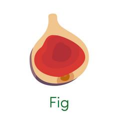 Sliced exotic fig tropical organic vitamin fruit vector