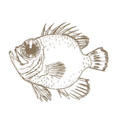 exotic ocean fish vector image vector image