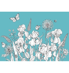 iris butterfly vector image vector image