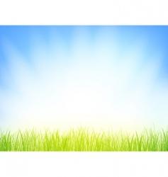 morning grass vector image