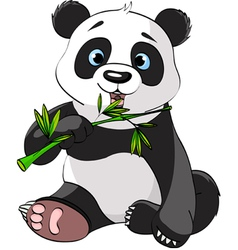 Baby panda sitting and munching on bamboo vector