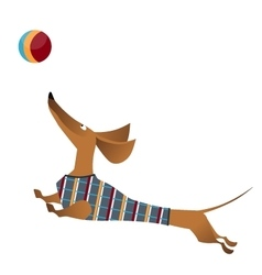 Cartoon of jumping dachshund dog vector