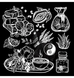 Hand drawn natural medicine herbs and healing set vector