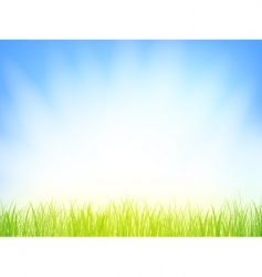 morning grass vector image vector image