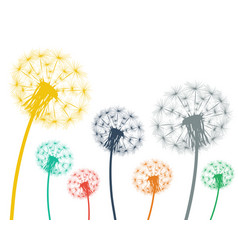 multi-colored dandelions on a white background vector image