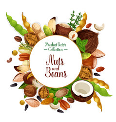 Nut and bean seed and herb poster vector