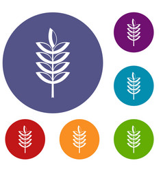 Rye spica icons set vector