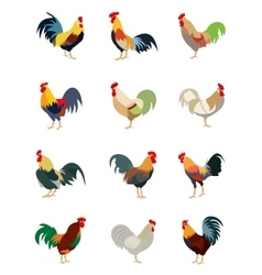 Colorful set of various roosters vector