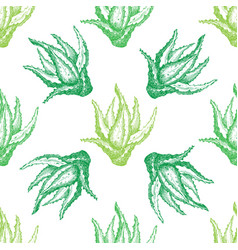 Pattern with aloe vera for decoration vector