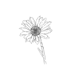 Flower line art monochrome vector