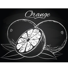 Ripe orange vector