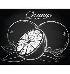 ripe orange vector image vector image