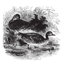 English teal vintage vector