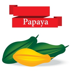 fresh papaya on white background vector image vector image
