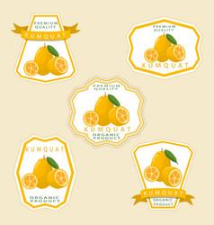 The theme kumquat vector