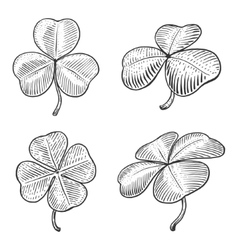 Clover leaf engraving style vector
