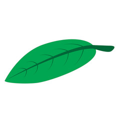 green leaf on white background green leaf icon vector image vector image