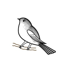 Hand drawn sparrow on a twig vector