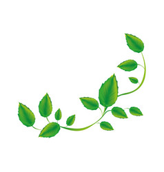 White background with green creeper vector