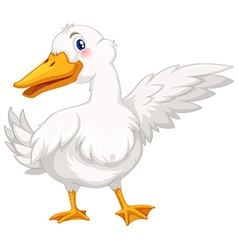 Duck with white feather vector