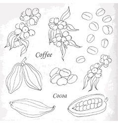 Set of coffee and cocoa elements doodle style vector