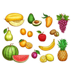 exotic fresh fruits isolated icons set vector image vector image