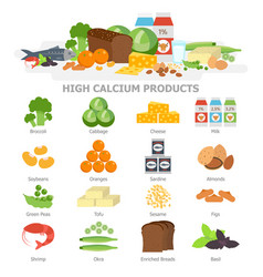 high calcium food infographic elements flat vector image vector image