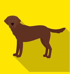 Mastiff single icon in flat stylemastiff vector