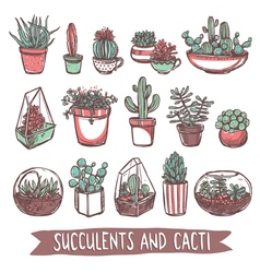 Succulents and cacti sketch collection vector