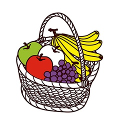 The fruits in a basket vector