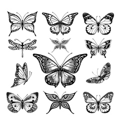 Butterflies graphic vector